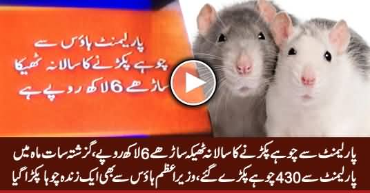 430 Rats Caught in Last Seven Months From Parliament, One Rat Caught From PM House