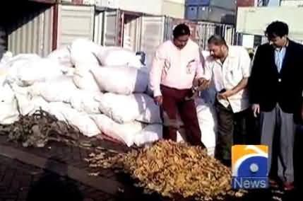 A Company Caught Red Handed While Trying to Smuggle 40,000 Tortoises From Karachi