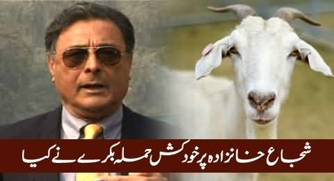 A Goat Was Used For Suicide Attack on Shuja Khanzada - Investigative Report