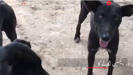 A Project by Punjab Govt to Reduce Population of Stray Dogs by Neutering