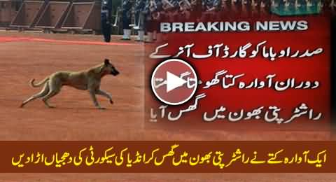 A Wandering Dog Exposed Indian Security During Barack Obama's Visit, Exclusive Video