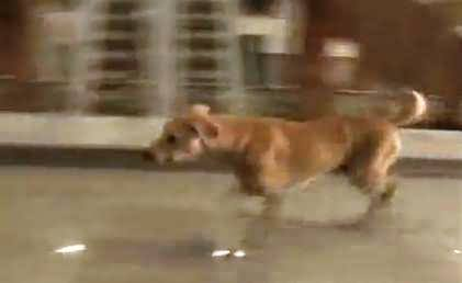 A Wild Dog Entered in Sindh Assembly's Old Historic Building