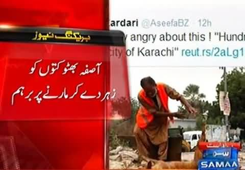 Asifa Bhutto Got Angry Over Killing of Stray Dogs in Karachi