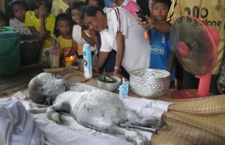 Buffalo Gave Birth to a Human Baby in Thailand - Strange Incident