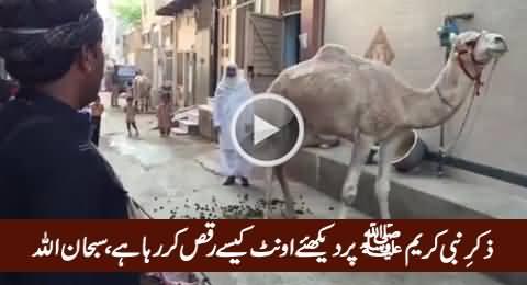 Camel Dancing on The Naat of Holy Prophet Hazrat Muhammad (PBUH), Subhanallah