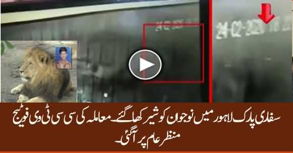 CCTV Video Of 18 Year Old Boy In The Cage of Lions In Safari Park Lahore