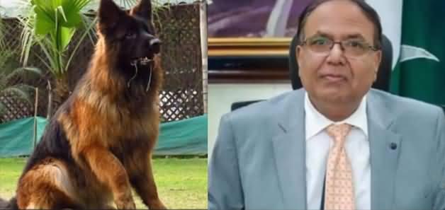 Commissioner Gujranwala Ka Gumshuda Kutta Mil Gaya