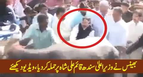 Cow Attacked CM Sindh Qaim Ali Shah, When He Tried To Touch Her