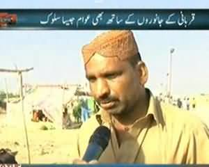 Dekh Tou (Qurbani ke Janwaron Ke Sath bhi Awaam Jesa Salook) - 25th September 2013