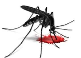 Dengue becoming worst in Sawat - 2 More Dead - Death Toll hits 35 From Dengue