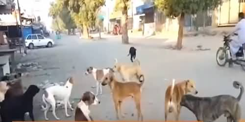 Earn 108 Rupees Through Killing Stray Dogs in Lyari - Jamat e Islami's MPA Strange Announcement