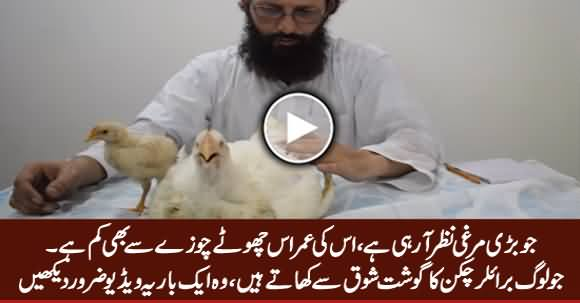 Everyone Who Eats Broiler Chicken, Must Must Watch This Video