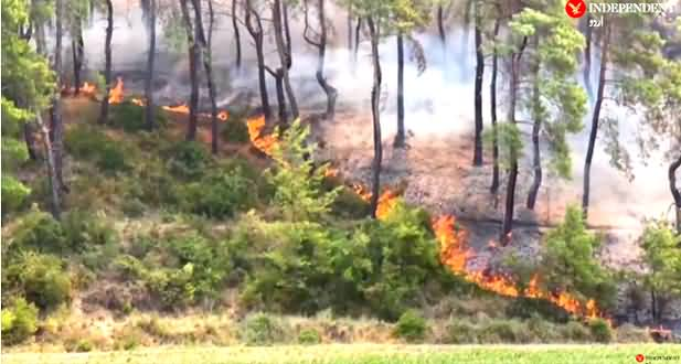 Fire Erupted In Forests in Turkey, Three Killed, More Than 100 Injured