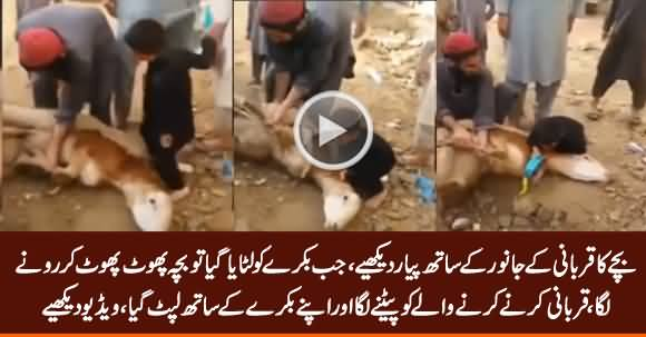 I Will Not Let You Sacrifice This Animal - See The Amazing Love of Child With His Goat