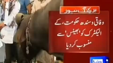 Jamat e Islami Protesting Against Load Shedding in Karachi With Buffalos