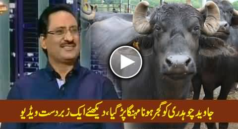 Javed Chaudhry Gets in Trouble in Comedy Show For Being a Gujjar, Must Watch