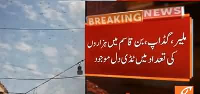 Karachi Under Locusts Attack, Many Crops Destroyed