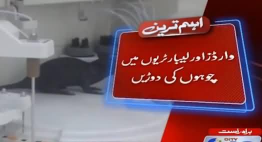 Lahore: Mayo Aur Services Hospitals Mein Chohon Ki Bharmaar