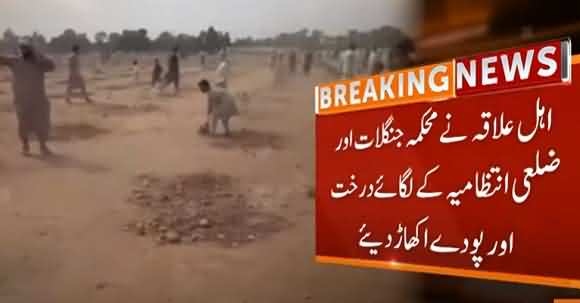 Locals Destroyed Hundred Of Trees Of Plantation Drive In KPK