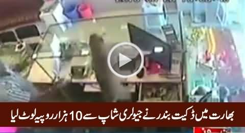 Monkey Robs Jewellery Shop in India, Exclusive Video