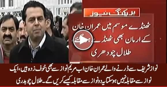 Nawaz Sharif Se Darne Waale Imran Khan Ab Maryam Se Bhi Khauf Zada Hain - Talal Chaudhry