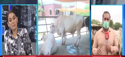 Night Edition (Expensive Animals in Cattle Market) - 20th July 2021