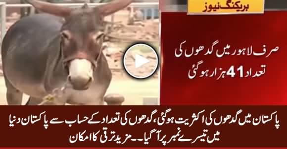 Pakistan Became Third Biggest Country Regarding Donkey Population