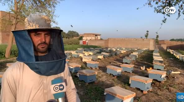 Profitable Business of Honey Farming in Pakistan
