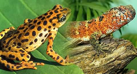 Rare Lizards, Frogs and Scorpions of Million of Rupees in Punjab and Sindh