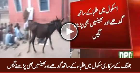 School of Jhang Where Children Getting Education With Donkeys And Buffalos