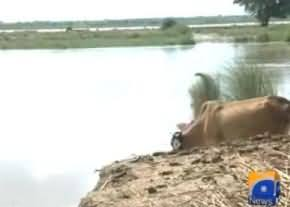 Serious Flood Situation in Sindh: High Level of Flood in Sukkur Barrage and Kotri Barrage