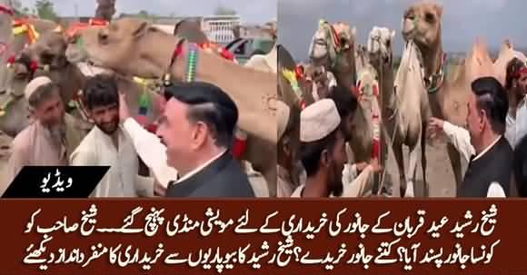 Sheikh Rasheed Reaches Cattle Market to Buy Sacrificial Animals For Eid