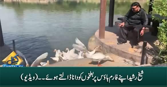 Sheikh Rasheed Feeding The Ducks on His Farm House
