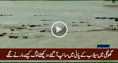 Snakes Floating In Ghotki Flood, Watch How People Trying to Kill Them