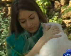 Tafteesh (Friendship of Humans with Animals) - 7th April 2014