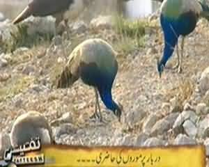 Tafteesh (Janwaron Kar Rohaniyat Mein Kirdar) - 24th March 2014