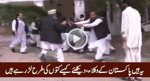 These Are The Lawyers of Pakistan, Watch How They Are Fighting