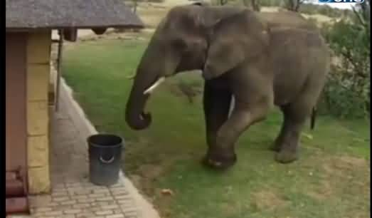 This Elephant Is More Intelligent Than Many of Us, Putting Garbage in Dustbin