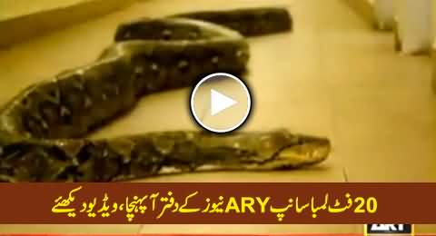 Twenty Feet Long Python Reached ARY News Office, Must Watch