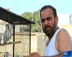 Wardaat (Crime Show) on Samaa News – 22nd July 2015