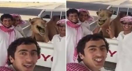 Watch Camel Laughing Like Human Beings While Taking Selfie, Really Interesting