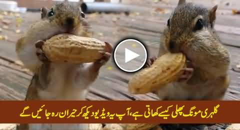Watch How Squirrels Eat Peanuts, Really Amazing and Interesting Video