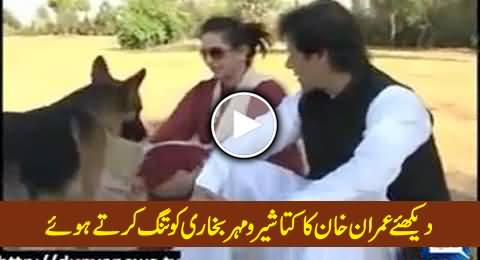Watch Imran Khan's Dog Sheru Annoying Mehar Bukhari During Interview (Old Video)