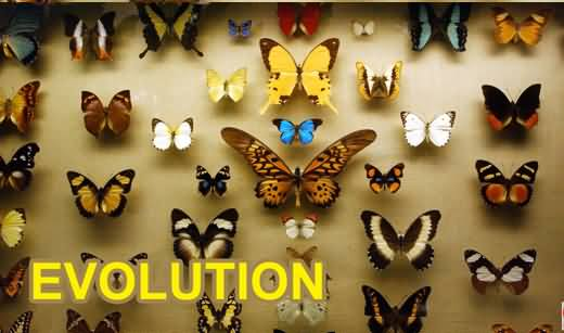 What Is Theory of Evolution? How Different Species Evolved? Explained in Detail